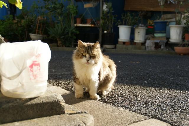散歩中に遭遇した猫