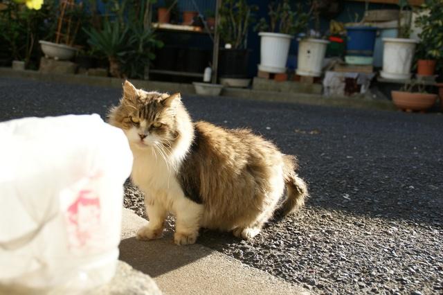 散歩中に遭遇した猫(2)
