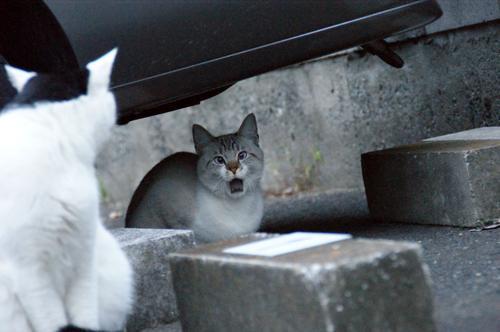 CAT_20081120_05.jpg