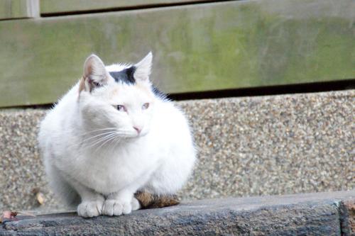 CAT_20081120_02.jpg